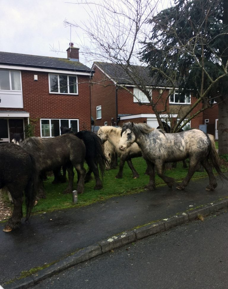 Police and residents round up loose horses in Kinoulton
