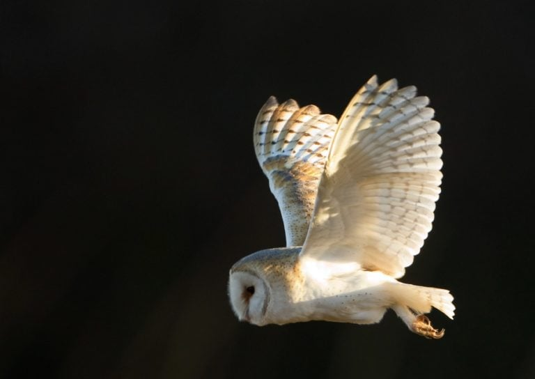 HS2 will 'divide and destroy' natural habitats for wildlife in Nottinghamshire, says Trust