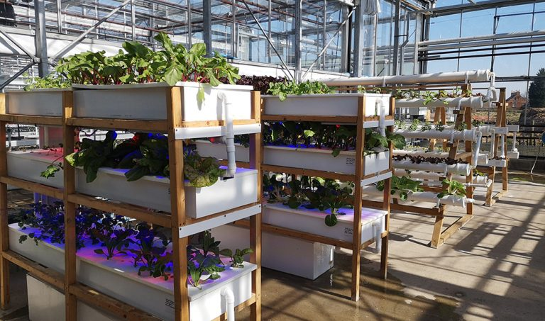 NTU donates crops from its vertical farm to Nottingham's homeless