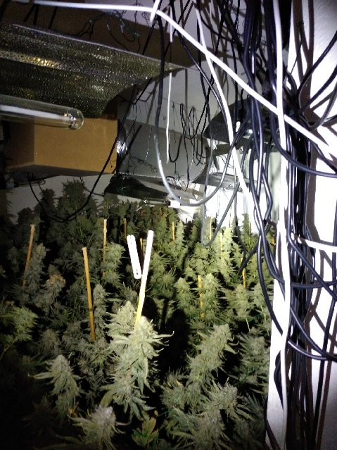 Bannerman Road Drugs Electrics