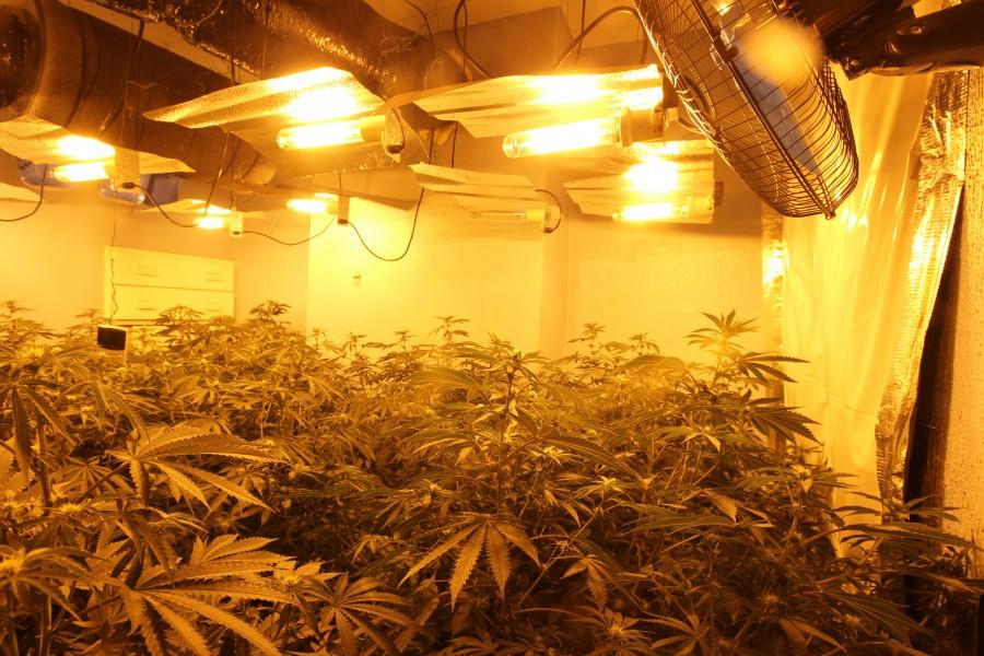 Cannabis grow in Bulwell