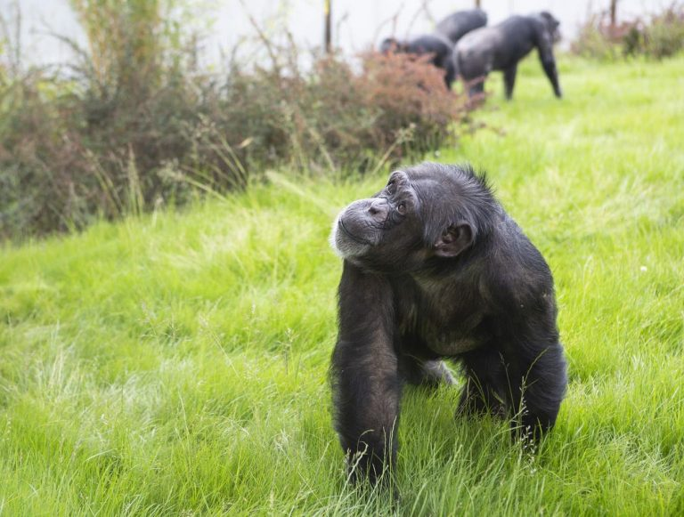 Twycross Zoo pleads with the Government as they are told to close 'indefinitely' following a change in the law