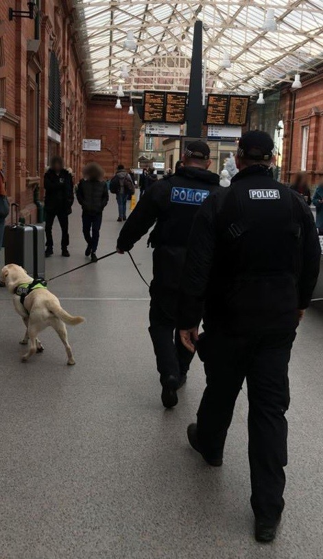 sniffer dog train station blur