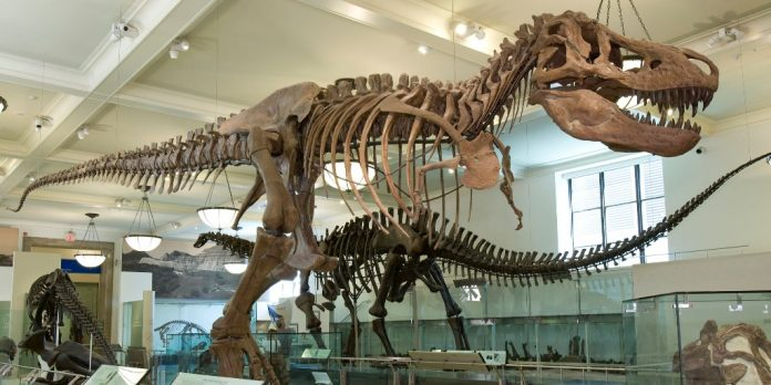 tyranosaurus rex full length 1024 512