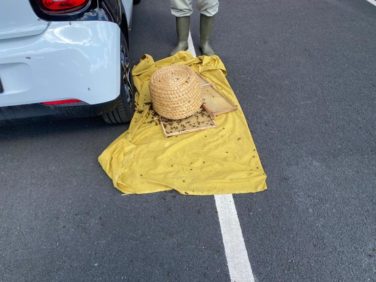Video: Beekeeper deals with swarm that closes GP surgery car park